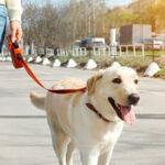 L'Ajuntament i el propietari del gos neguen que l'animal estigui tancat al balcó com afirma FAADA