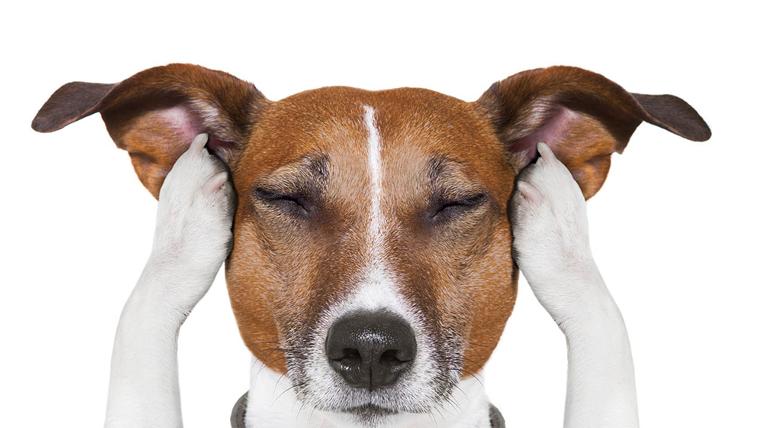 Com preparar el teu gos per la revetlla de Sant Joan