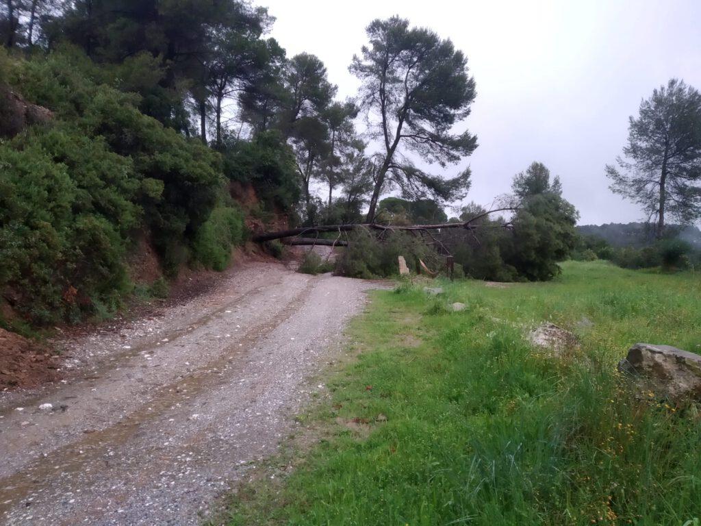 Les pluges fan caure 7 arbres i provoquen 5 esllavissades a Sant Cugat